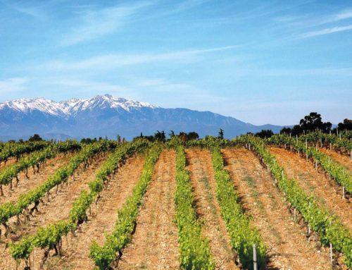 Les Pyrénées-Orientales ou l'art de cultiver la vigne
